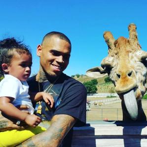 Chris Brown Giraffe